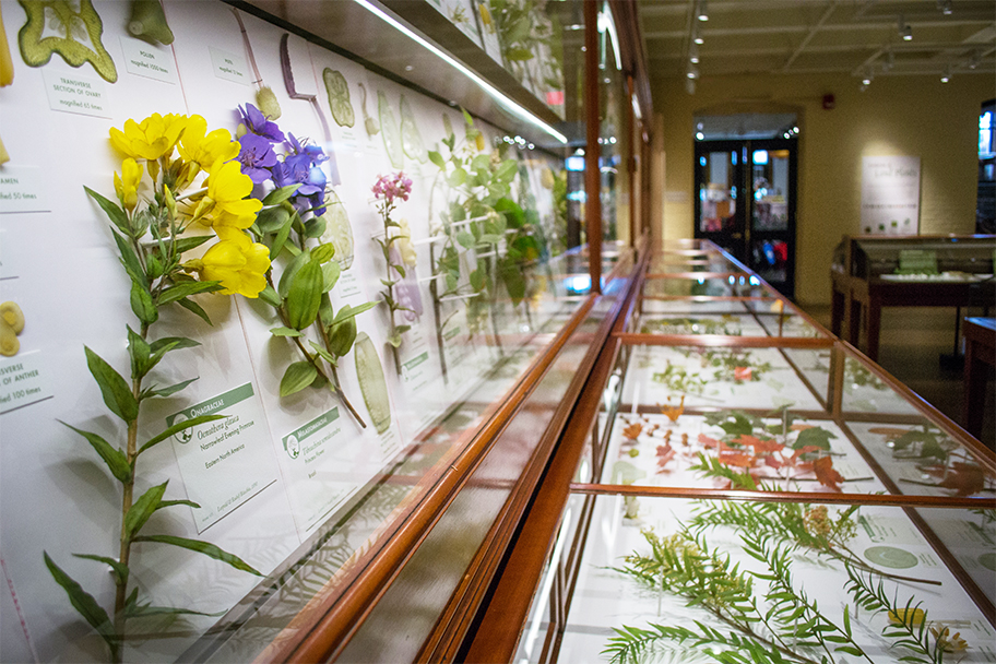 Ageless a new look at an old flower exhibit science media awards summit - Model herbarium ...